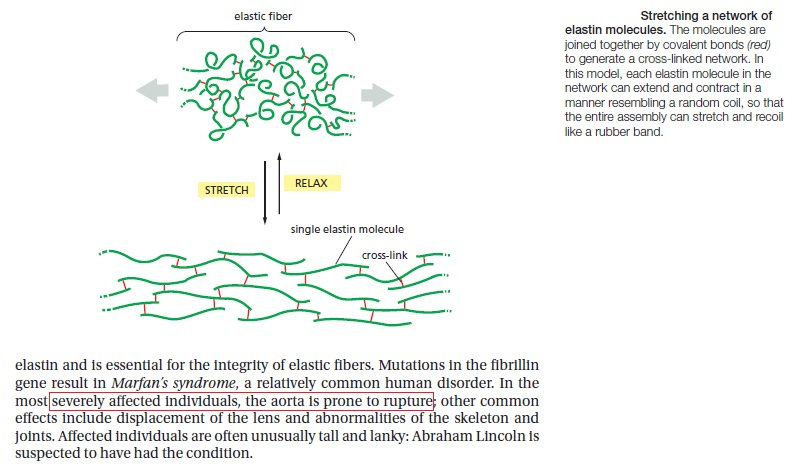 Collagen, the most abundant protein in the human body, and its synthesis Elasti11