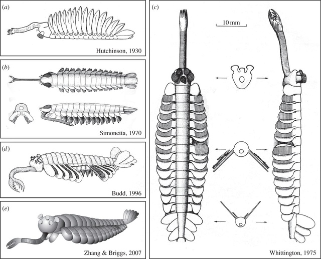 Opabinia - the strangest animal of the Cambrian F2_lar11