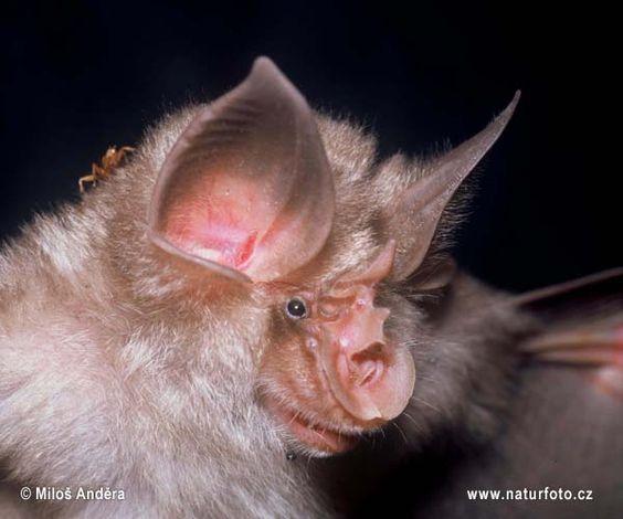 Spectacular bats F831b310