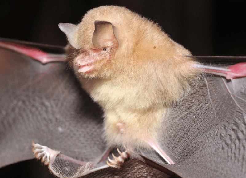 Spectacular bats Fig-2-10