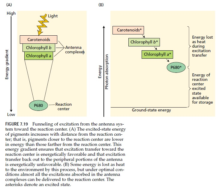Light harvesting complex of photosynthesis Funnel10
