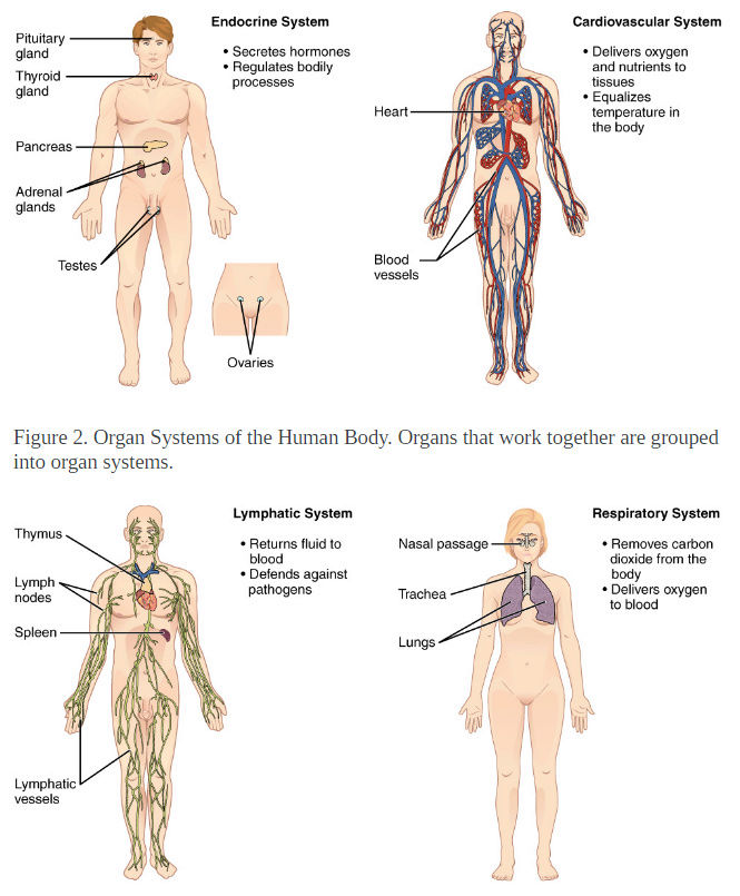Structural Organization of the Human Body Human_10