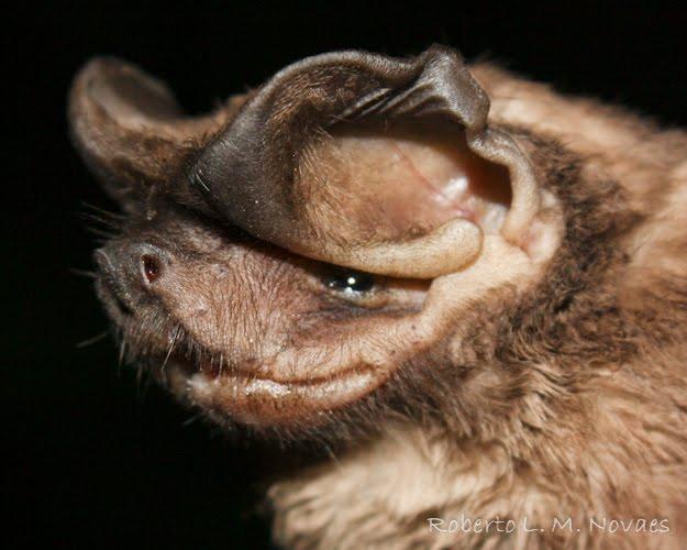 Spectacular bats Img_3010