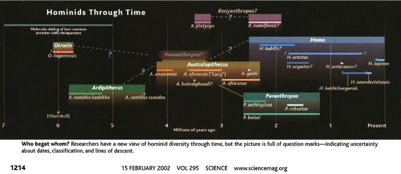 The origin of Homo Sapiens & timeline of human evolution In_sea16