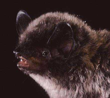 Spectacular bats Long-l10