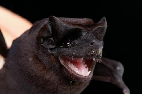 Spectacular bats Lqswji10