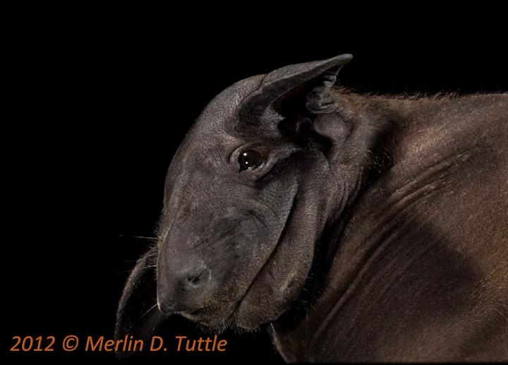 Spectacular bats Mdt_1210