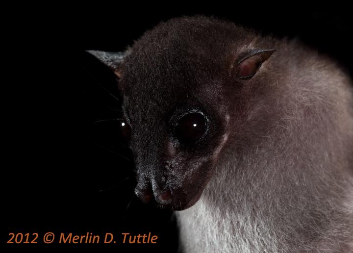 Spectacular bats Mdt_1211