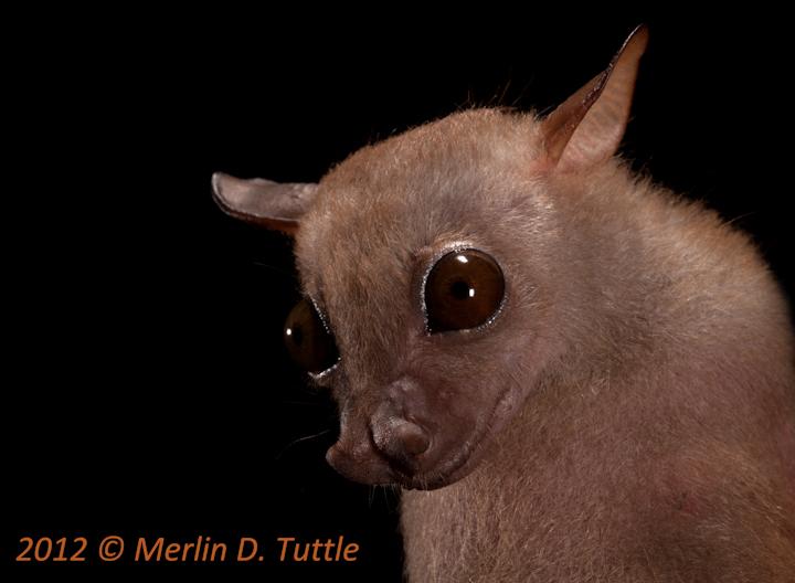 Spectacular bats Mdt_1212