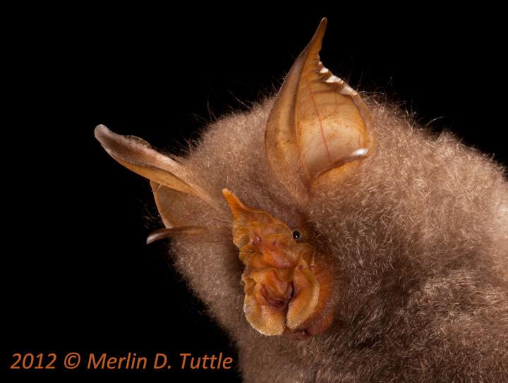 Spectacular bats Mdt_1213