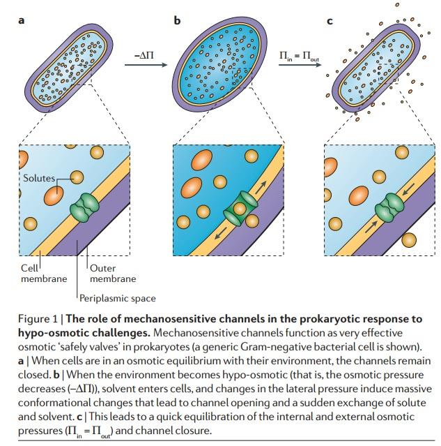 Molecular machines in biology Mechan10