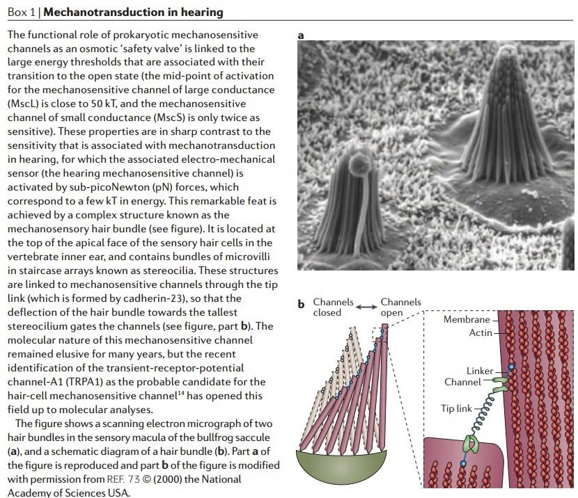 Molecular machines in biology Mechan11