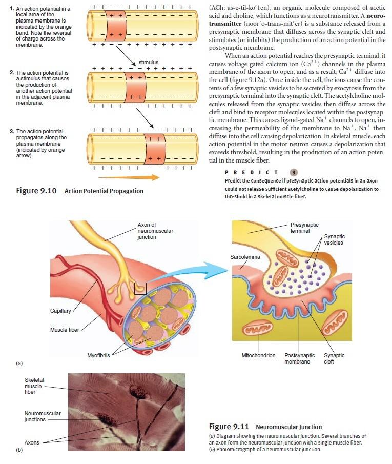 The Human Nervous System: Evidence of Intelligent Design  Membra10