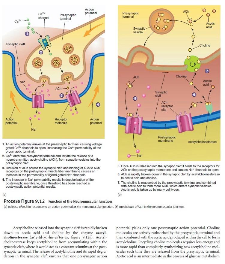 The Human Nervous System: Evidence of Intelligent Design  Membra11