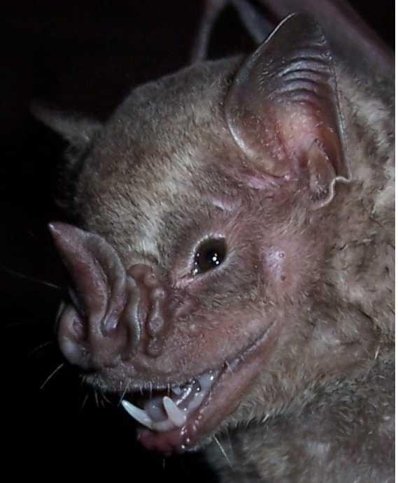 Spectacular bats Murcie10