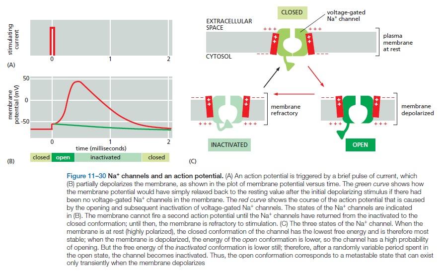 The Human Nervous System: Evidence of Intelligent Design  Na_cha10
