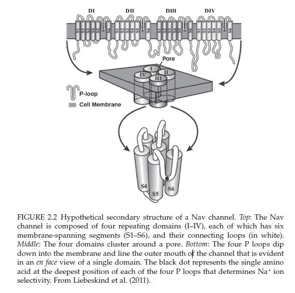The Human Nervous System: Evidence of Intelligent Design  Nav_ch10