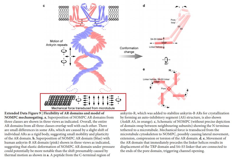 Molecular machines in biology Nompc_10