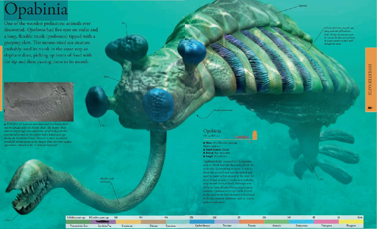 Opabinia - the strangest animal of the Cambrian Opabin11