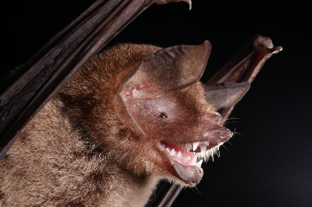 Spectacular bats Parnel10