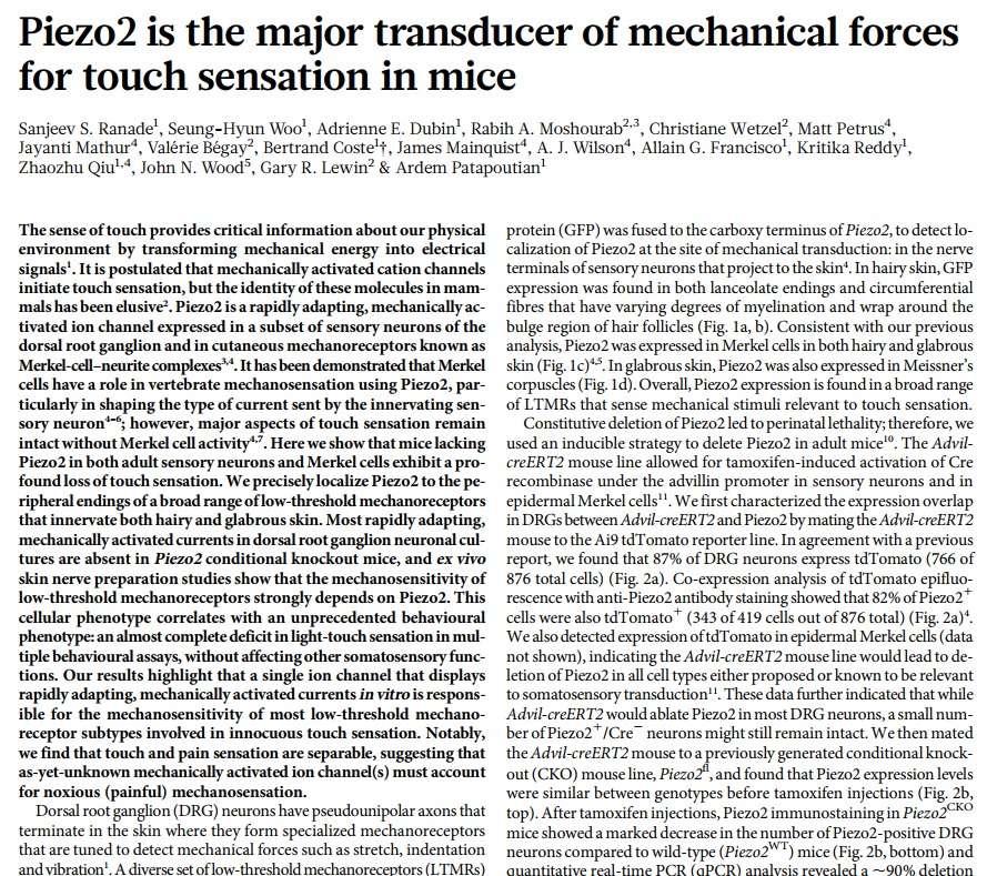 The skin - marvel of intelligent design Piezo216