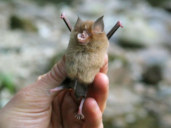 Spectacular bats R-blas10