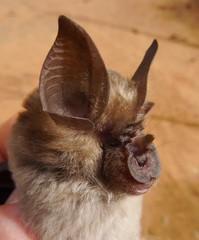 Spectacular bats Small10