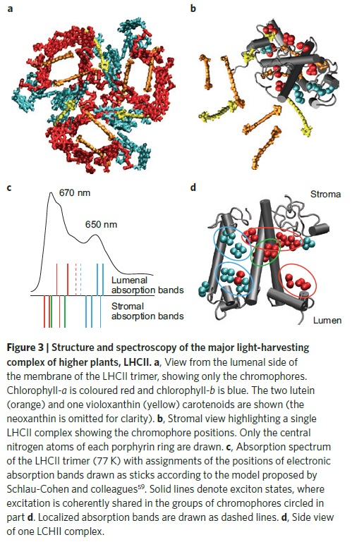 Light harvesting complex of photosynthesis Struct11