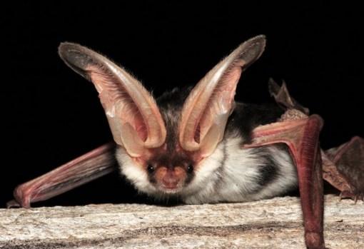 Spectacular bats Top-1010