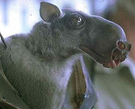 Spectacular bats Top-1011
