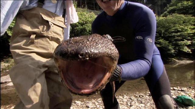 Salamanders are amazing Tumblr12