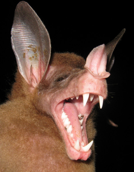 Spectacular bats Vamspe10