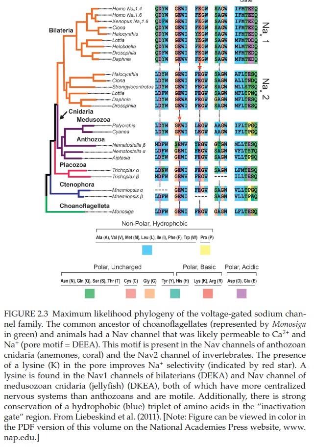 The Human Nervous System: Evidence of Intelligent Design  Voltag11