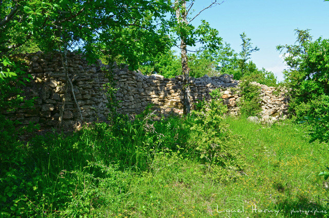 Balade sur le Chemin des Cadeules 2017 05_le_10