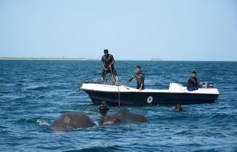 Sri Lanka: Deux éléphants secourus en pleine mer 960x6110