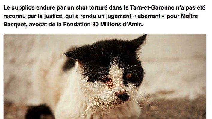 Pétition pour le supplice du chat du Tarn-et-Garonne ! Chat_t10