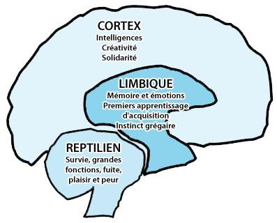 Fonctionnement de notre cerveau Troisc10