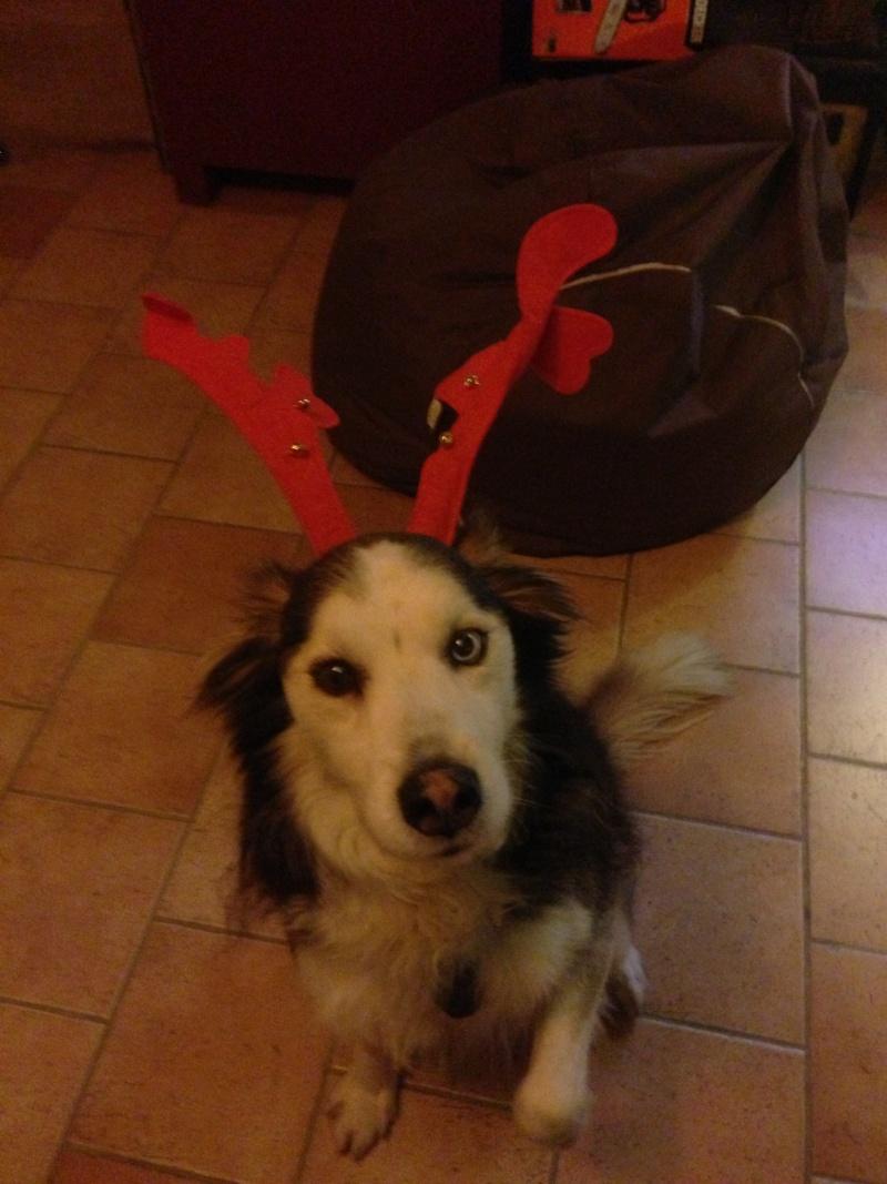mon loup est prêt pour la fêtes  Img_0111
