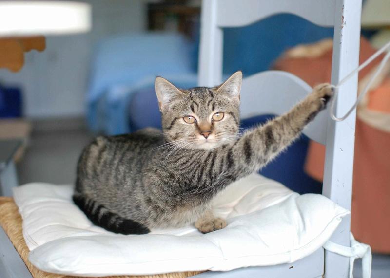 naoma - NAOMA, chatonne européenne tigrée, née le 27/04/17 Naoma_14