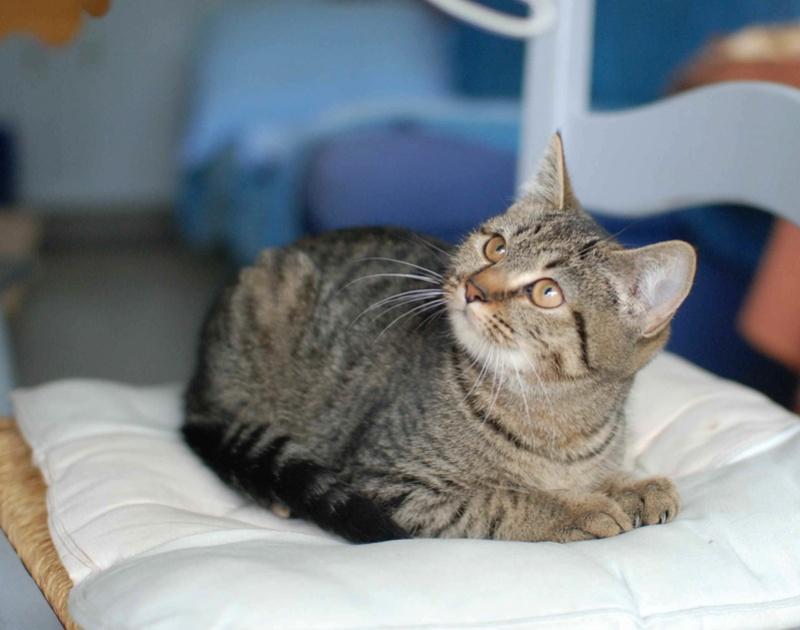 naoma - NAOMA, chatonne européenne tigrée, née le 27/04/17 Naoma_15