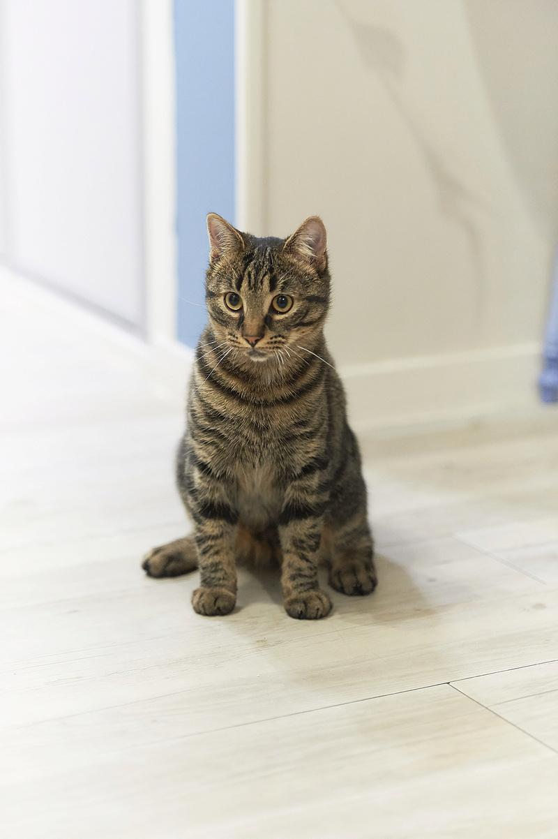 NELYO, chaton européen tigré, né en mars 2017 Nelyo_29