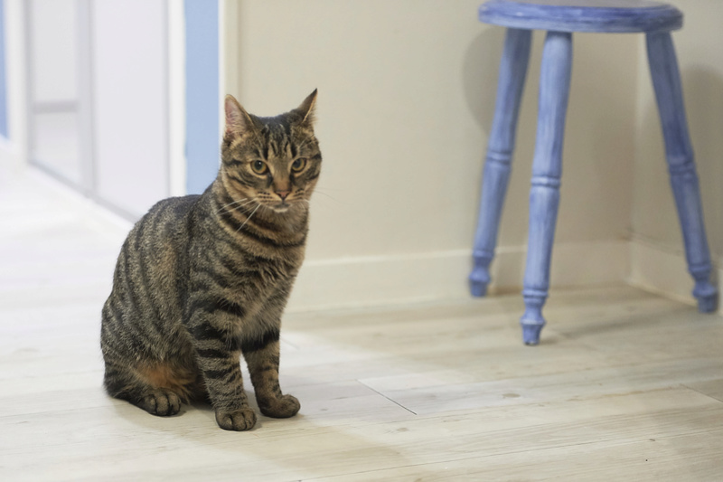 NELYO, chaton européen tigré, né en mars 2017 Nelyo_30