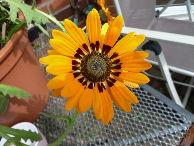 Begleitpflanzen der Kakteen in Haus und Garten - Seite 25 Byreno10