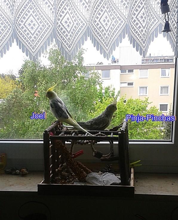 Meine Mitbewohner-eine Schöpfung JHWH - Seite 3 Pinia_11