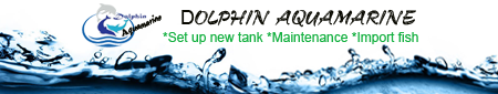 DOLPHIN AQUAMARINE