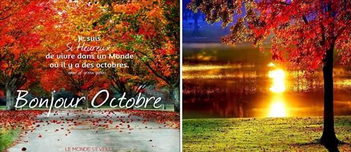 Bonjour / Bonsoir d'Octobre  - Page 5 Photo_10