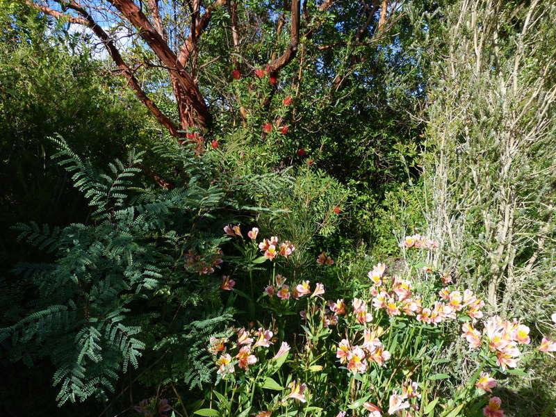 encore des beaux jours au jardin  - Page 2 Alstro10