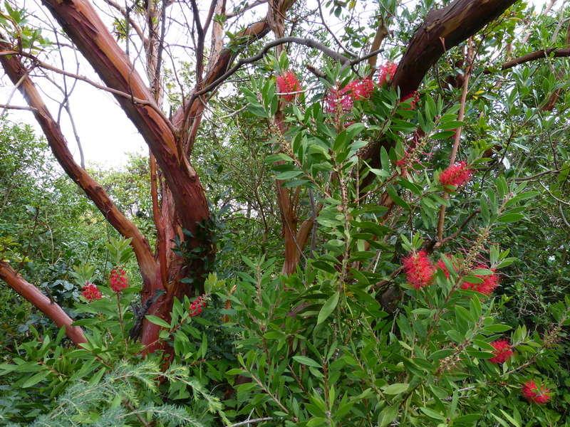 encore des beaux jours au jardin  Callis11