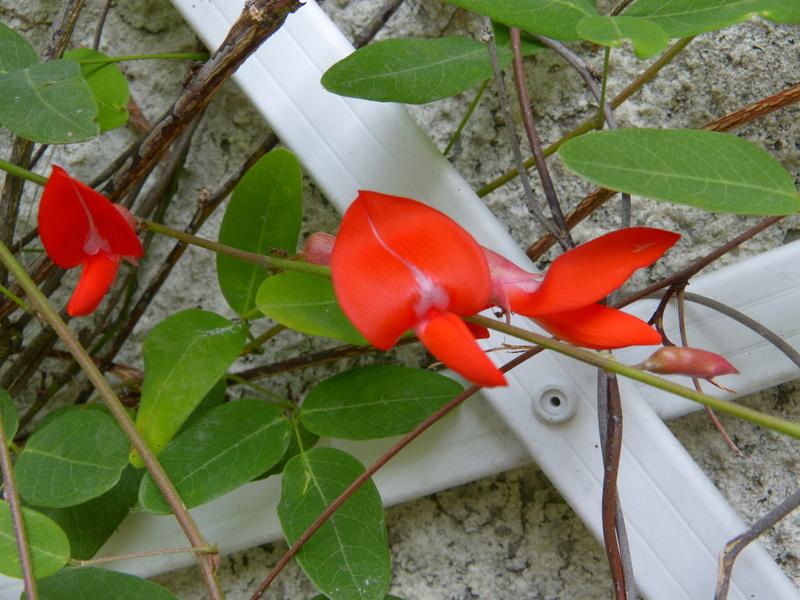 jardins d'été, jardins se plaisent Campto13