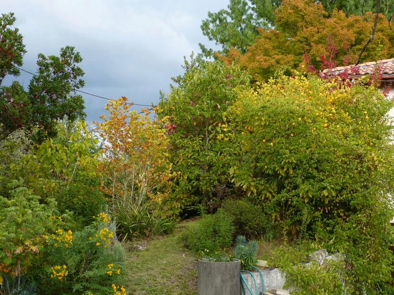 encore des beaux jours au jardin  - Page 3 Dybut_10